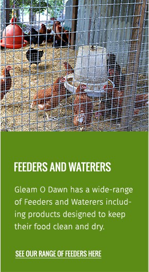 chooks-feeds