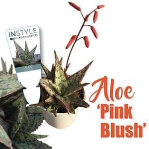 Aloe Pink Blush