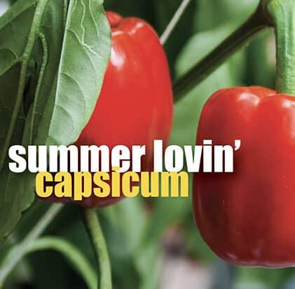 Summer loving capsicum