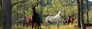 Equine Flyer - Rural Store Supplies - Gleam O' Dawn Rural Store