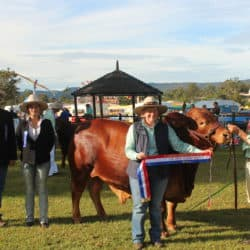 Samford show beef cattle exhibiton - Gleam O'Dawn rural suppliers