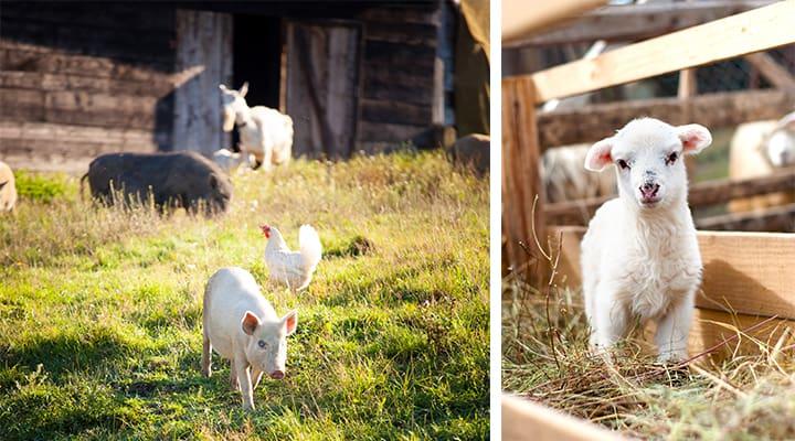 Other-Livestock