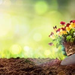 Spring flowers - Garden Supplies Brisbane - Gleam O' Dawn Rural Store