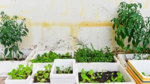 Styrofoam planters - Garden Supplies Brisbane - Gleam O' Dawn Rural Store