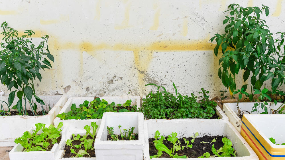 Styrofoam planters