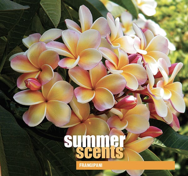 summer scents