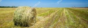 A roll of hay in a field - Horse Supplies Brisbane - Gleam O' Dawn Rural Store