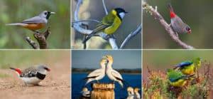 Bird count - Garden Supplies Brisbane - Gleam O' Dawn Rural Store