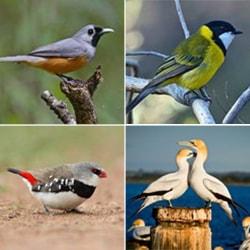 Birds - Garden Supplies Brisbane - Gleam O' Dawn Rural Store