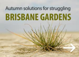 Brisbane garden - Garden Supplies Brisbane - Gleam O' Dawn Rural Store
