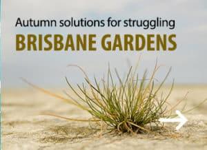 Automn solution for Brisbane garden - Garden Supplies Brisbane - Gleam O' Dawn Rural Store