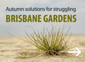Autumn Solutions for Brisbane Gardens