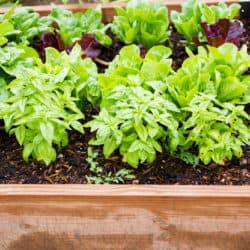edible garden - vege planter