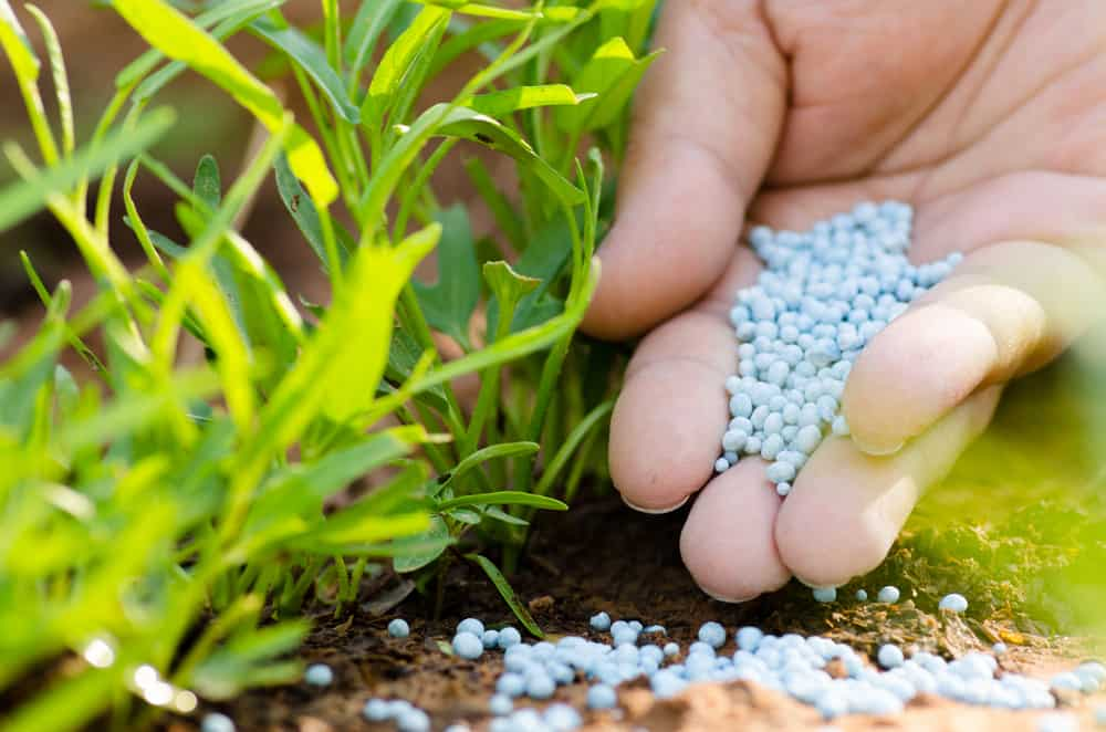 fertilising garden
