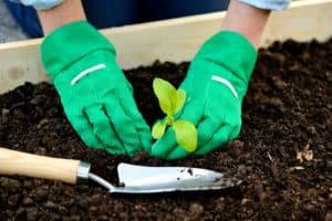 gloved hands gardening - Garden Supplies Brisbane - Gleam O' Dawn Rural Store