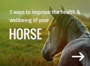 Horse health - Farm Supplies Brisbane - Gleam O' Dawn Rural Store