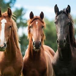 three horses - Farm Supplies Brisbane - Gleam O' Dawn Rural Store