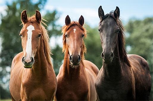 horse-image1