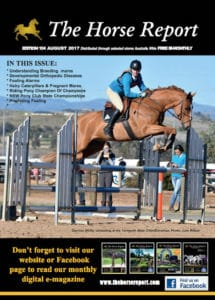 Horse report August 2017 - Garden Supplies Brisbane - Gleam O' Dawn Rural Store