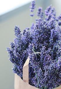 Lavender - Farm Supplies Brisbane - Gleam O' Dawn Rural Store