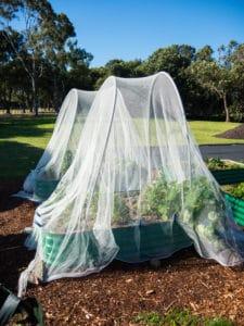nets over garden planters - Garden Supplies Brisbane - Gleam O' Dawn Rural Store