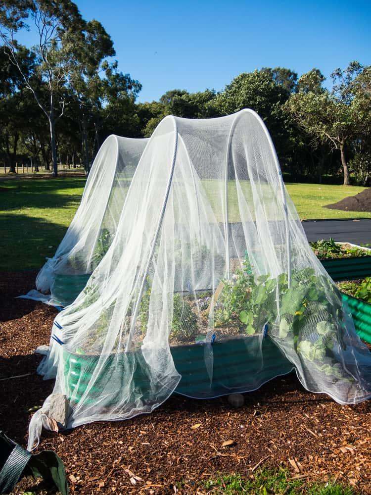 nets over garden planters