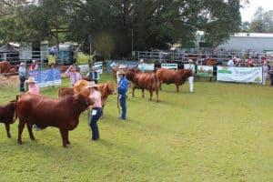Samford show - Farm Supplies Brisbane - Gleam O' Dawn Rural Store