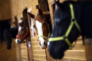 Horse stables - Farm Supplies Brisbane - Gleam O' Dawn Rural Store