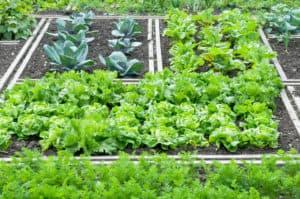 veggie patch - Garden Supplies Brisbane - Gleam O' Dawn Rural Store