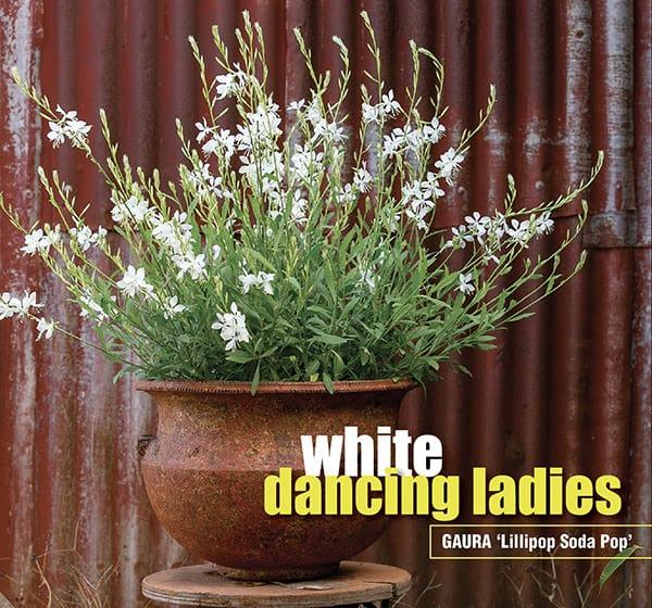 dancing white ladies