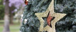 Christmas star - Farm Supplies Brisbane - Gleam O' Dawn Rural Store